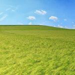 paissatge blat verd